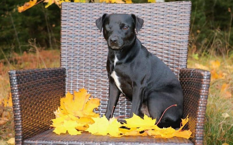 Patterdale terrier health problems