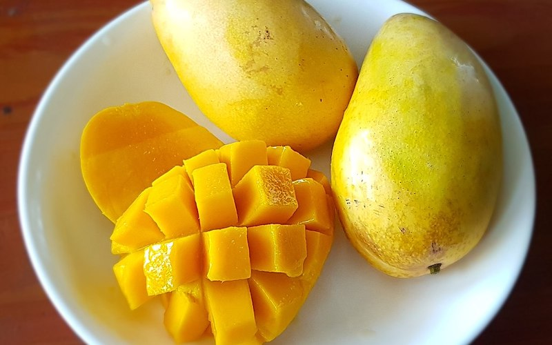 Can dogs have Mango