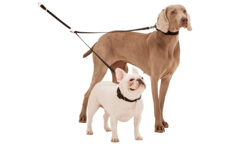 Double Dog Lead