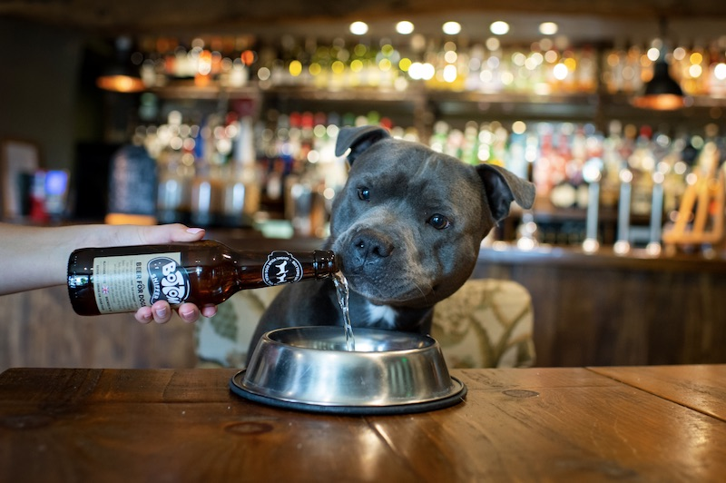woof and brew dog beer
