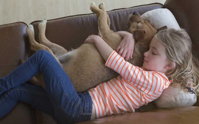 Are Patterdale Terriers Good with Kids