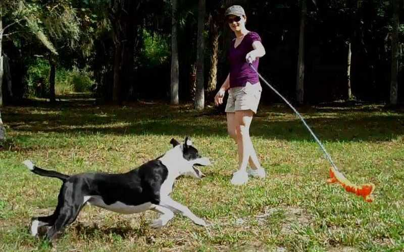 Flirt Pole for Dogs