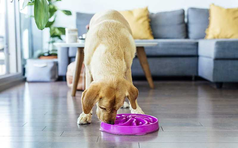 Slow Feeder Dog Bowl
