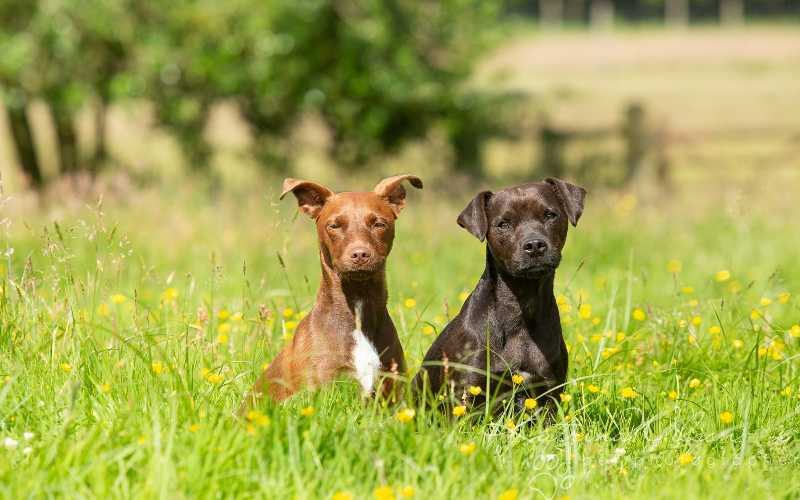 Two Dogs - Is it good to have two dogs