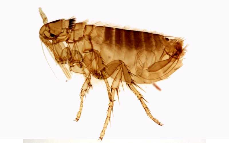 Best flea bombs for the House